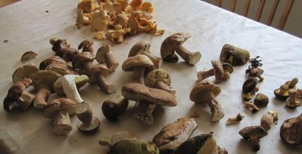 Pilz | mushroom 1